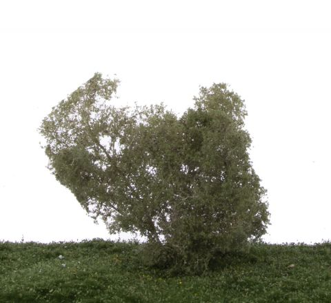 Silhouette Filigree bushes Birch - Summer - N-Z (1:160-220) - (101-12S)