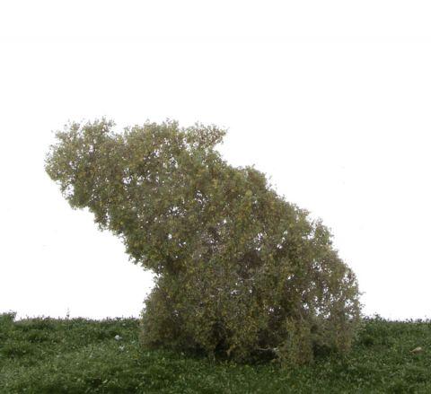 Silhouette Filigree bushes Birch - Early fall - N-Z (1:160-220) - (101-13S)
