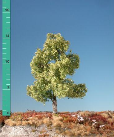 Silhouette Moor birch - Spring - 0 (< ca. 8cm) - N-Z (1:160-220) - (110-01)