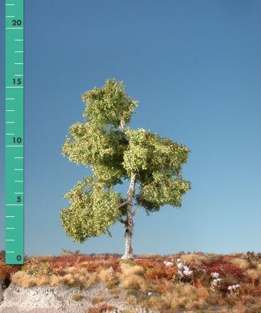 Silhouette Moor birch - Early fall - 0 (< ca. 8cm) - N-Z (1:160-220) - (110-03)