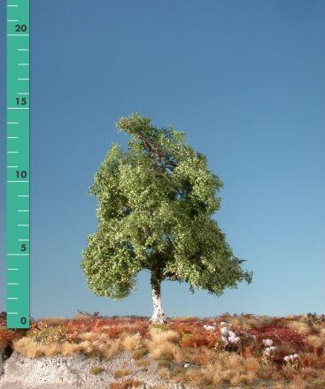 Silhouette Moor birch - Summer - 1 (ca. 10-13cm) - N-Z (1:160-220) - (110-12)