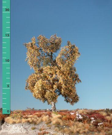 Silhouette Moor birch - Late fall - 1 (ca. 10-13cm) - N-Z (1:160-220) - (110-14)
