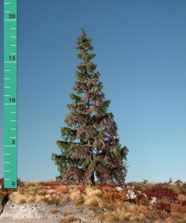 Silhouette Weathered green spruce - Summer - 0 (< ca. 8cm) - N-Z (1:160-220) - (173-06)