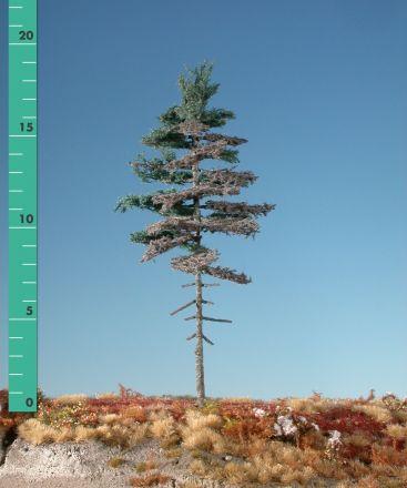 Silhouette Weathered nordic fir high trunk - Summer - 1 (ca. 10-13cm) - N-Z (1:160-220) - (177-16)