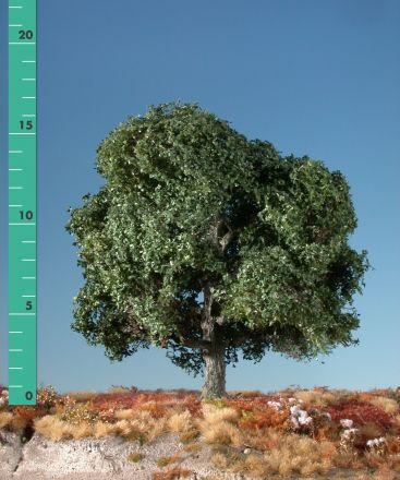 Silhouette Oak - Summer - 1 (ca. 10-13cm) - N-Z (1:160-220) - (180-12)