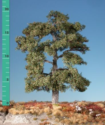 Silhouette Oak - Early fall - 1 (ca. 10-13cm) - N-Z (1:160-220) - (180-13)
