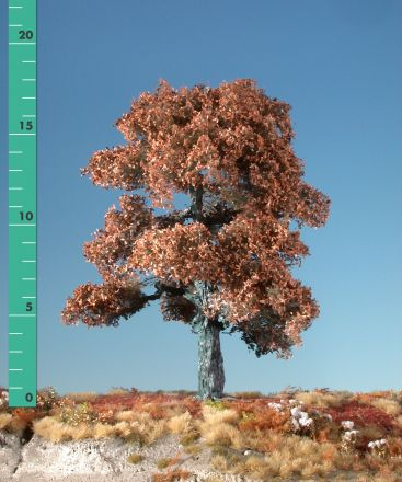Silhouette Oak - Late fall - 1 (ca. 10-13cm) - N-Z (1:160-220) - (180-14)
