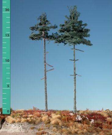 Silhouette Inside forest nordic fir - Summer - 3 (ca. 22-29cm) - H0 (1:87) - (278-32)
