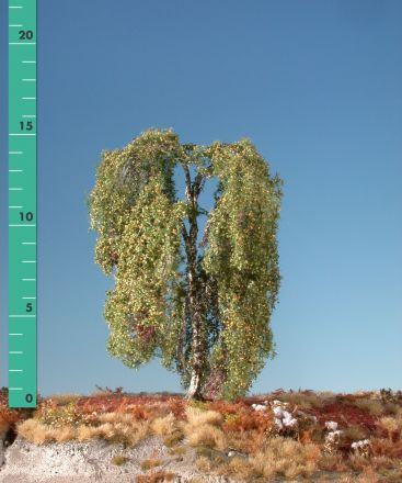 Silhouette Weeping birch - Early fall - ca. 24cm - 0-1 (1:45+) - (311-33)