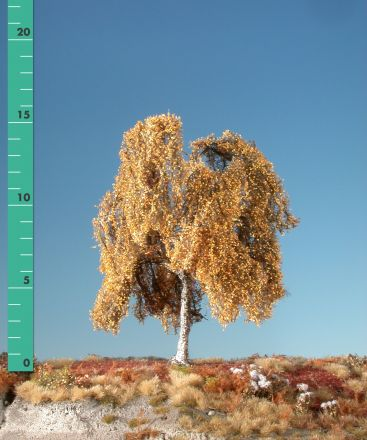 Silhouette Weeping birch - Late fall - ca. 24cm - 0-1 (1:45+) - (311-34)