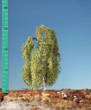 Silhouette Weeping birch - Spring - ca. 40cm - 0-1 (1:45+) - (311-41)