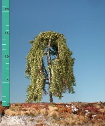 Silhouette Weeping birch - Summer - ca. 40cm - 0-1 (1:45+) - (311-42)