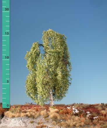 Silhouette Weeping birch - Spring - ca. 57cm - 0-1 (1:45+) - (311-51)