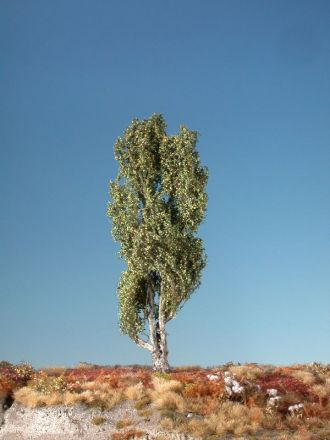 Silhouette Lombardy poplar - Spring - ca. 26cm - 0-1 (1:45+) - (313-31)