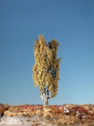 Silhouette Lombardy poplar - Late fall - ca. 26cm - 0-1 (1:45+) - (313-34)
