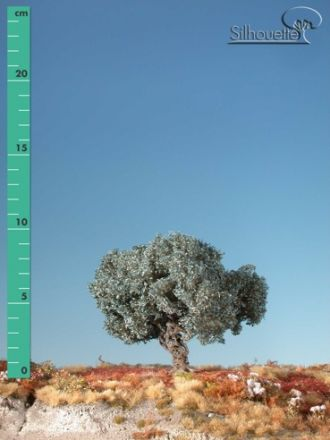 Silhouette Olive tree - Summer - ca. 24cm - 0-1 (1:45+) - (345-32)