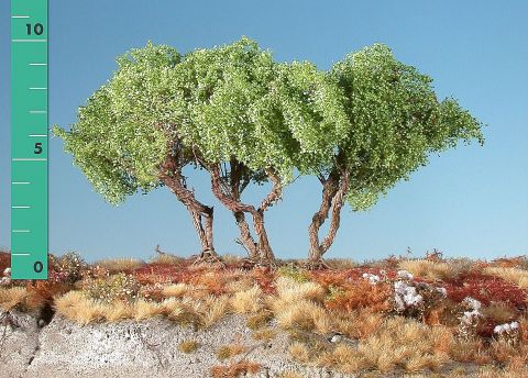 Silhouette High shrubs - Spring - ca. 12cm - 0-1 (1:45+) - (350-11)