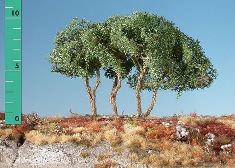 Silhouette High shrubs - Summer - ca. 19cm - 0-1 (1:45+) - (350-22)
