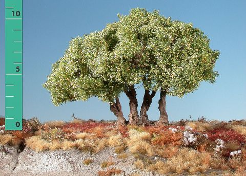 Silhouette High shrubs - Early fall - ca. 19cm - 0-1 (1:45+) - (350-23)