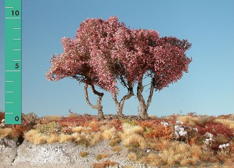 Silhouette High shrubs - Late fall - ca. 19cm - 0-1 (1:45+) - (350-24)