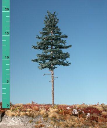 Silhouette Nordic fir high trunk - Summer - ca. 42cm - 0-1 (1:45+) - (377-42)