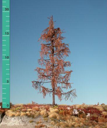 Silhouette Larch - Barren - ca. 39cm - 0-1 (1:45+) - (379-40)
