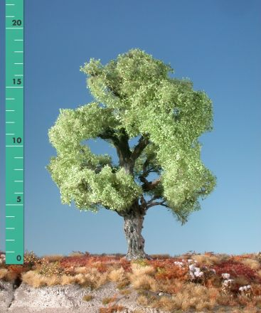 Silhouette Oak - Spring - ca. 68cm - 0-1 (1:45+) - (380-51)