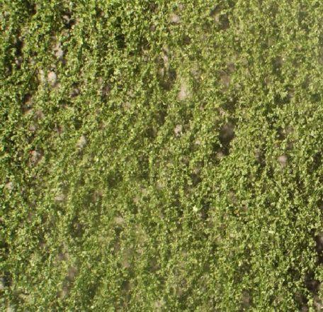 Silhouette Birch foliage - Summer - ca. 15x4cm - N-Z (1:160-220) - (910-12S)