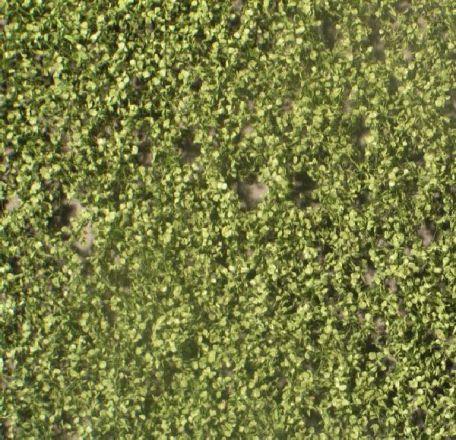Silhouette Birch foliage - Summer - ca. 15x4cm - H0 (1:87) - (910-22S)