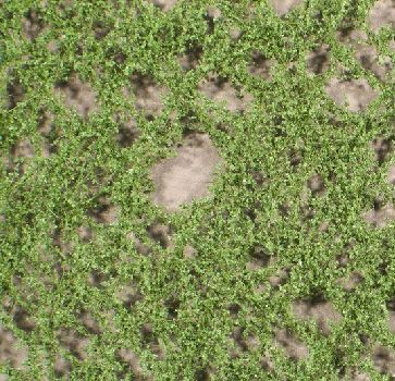 Silhouette Lombardy poplar foliage - Summer - ca. 15x4cm - N-Z (1:160-220) - (913-12S)