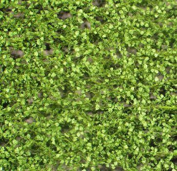 Silhouette Lombardy poplar foliage - Spring - ca. 15x4cm - 0-1 (1:45+) - (913-31S)
