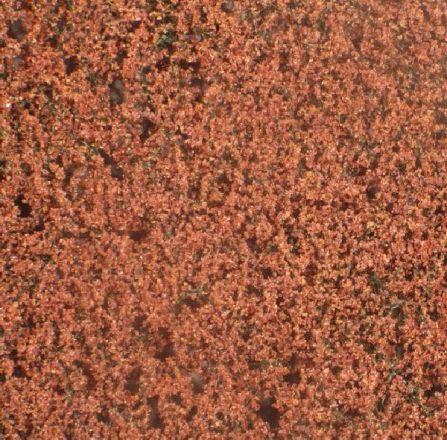 Silhouette Beech foliage - Late fall - ca. 15x4cm - N-Z (1:160-220) - (920-14S)