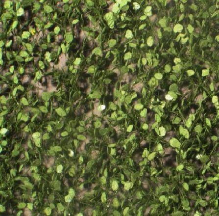 Silhouette Beech foliage - Summer - ca. 15x4cm - 0-1 (1:45+) - (920-32S)