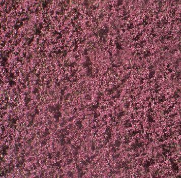Silhouette Copper Beech foliage - Summer - ca. 15x4cm - N-Z (1:160-220) - (922-12S)