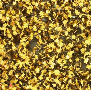 Silhouette Maple foliage - Late fall (yellow) - ca. 63x50cm - H0 (1:87) - (930-24G)