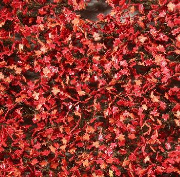 Silhouette Maple foliage - Late fall (red) - ca. 63x50cm - H0 (1:87) - (930-25G)