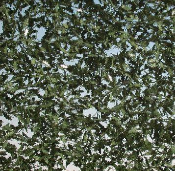 Silhouette Oak foliage - Summer - ca. 63x50cm - 0-1 (1:45+) - (980-32G)