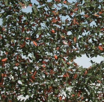 Silhouette Oak foliage - Early fall - ca. 63x50cm - 0-1 (1:45+) - (980-33G)